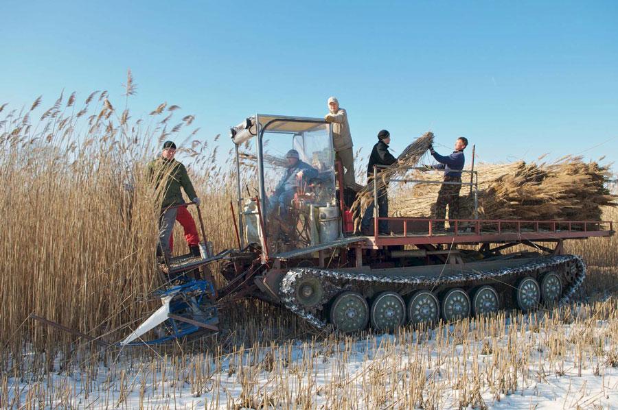 Unikat: früher ein Panzer, heute mobile Mini-Manufaktur zur Schilfernte <br /> Foto: M. Breidenbach
