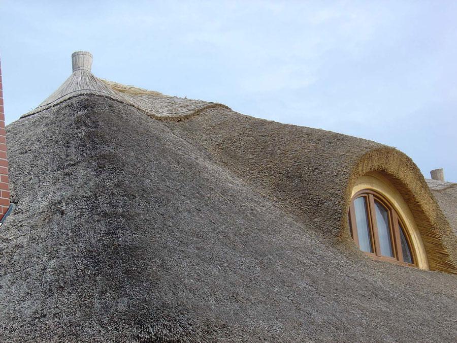 Schilf im Reetdach Foto: Willhardt